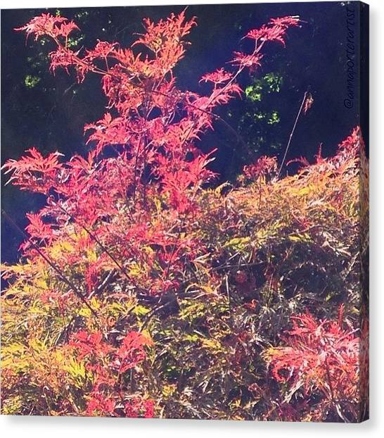 Autumn Leaves Canvas Print - Feel The Glow by Anna Porter