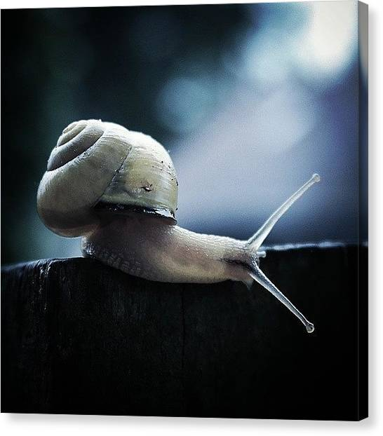 Spiral Canvas Print - Feeling A Tad Grey :( #snail #cold by Bex Byrne