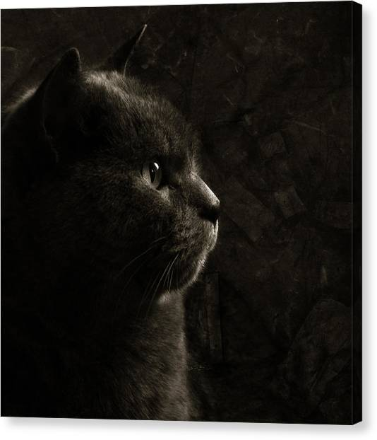 Chartreuxes Canvas Print - Feline Perfection by Laura Melis