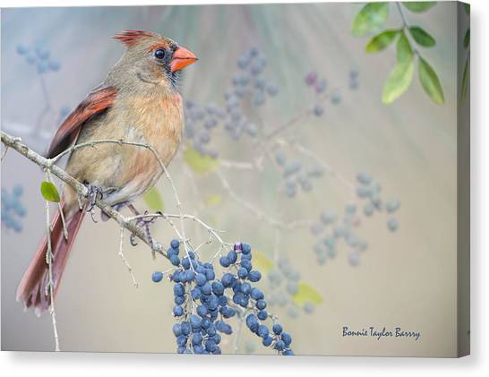 Wild Berries Canvas Print - Female Cardinal And Wild Berries by Bonnie Barry
