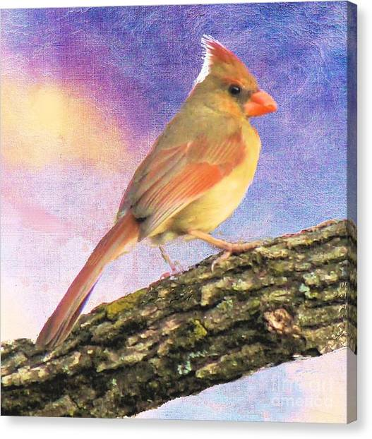 Female Cardinal Away From Sun Canvas Print