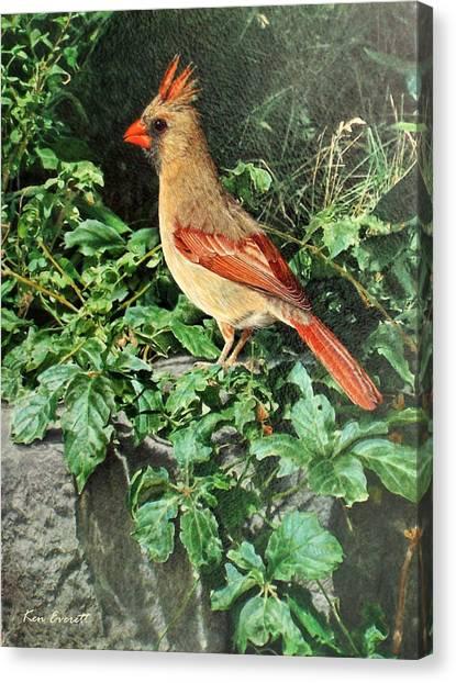 England Artist Canvas Print - Female Cardinal  by Ken Everett