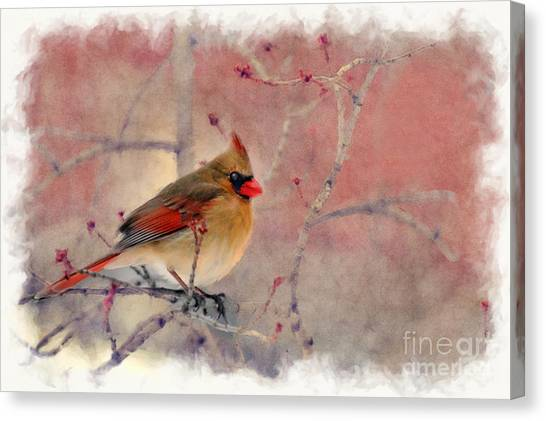 Female Cardinal Portrait Canvas Print