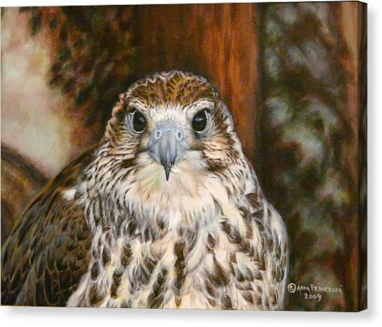 Female Of Saker Falcon Canvas Print by Anna Franceova