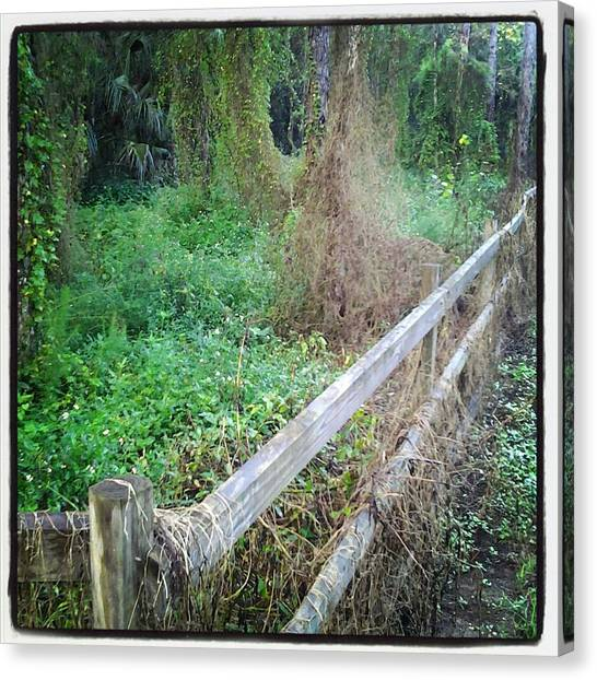 Fence Canvas Print by Chasity Johnson