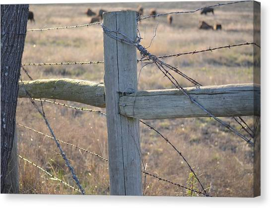 Fenced Canvas Print by Kelly Kitchens