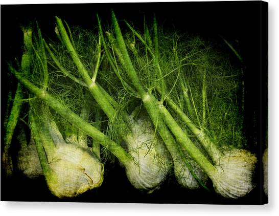 Flemish Fennel Art Canvas Print