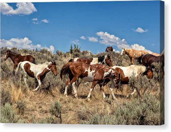 Feral And Free Canvas Print