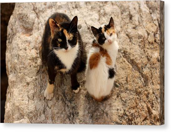 Sex Kitten Canvas Print - Feral Cat And Kitten by Jeanne White
