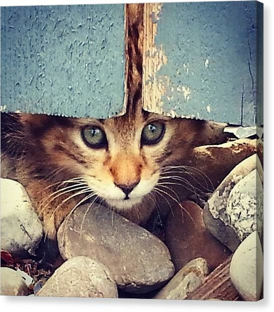 Animal Canvas Print - Peek A Boo Kitten by Mark Kiver