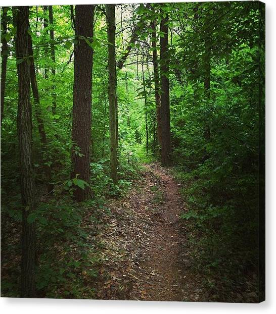 Forests Canvas Print - #ferdinand #forest #indiana #slowhikers by Melissa Wyatt