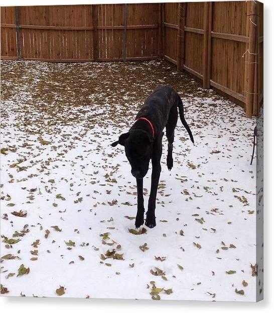 Mastiffs Canvas Print - Fergalicious Liked The Snow! #mastiff by Shelbi Ireland