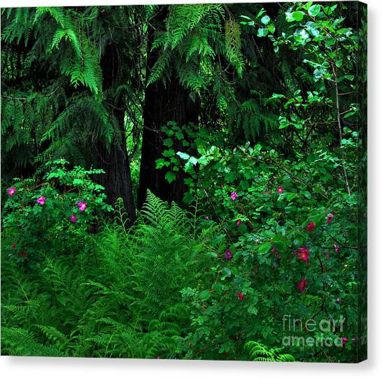Fern And Wild Roses Canvas Print