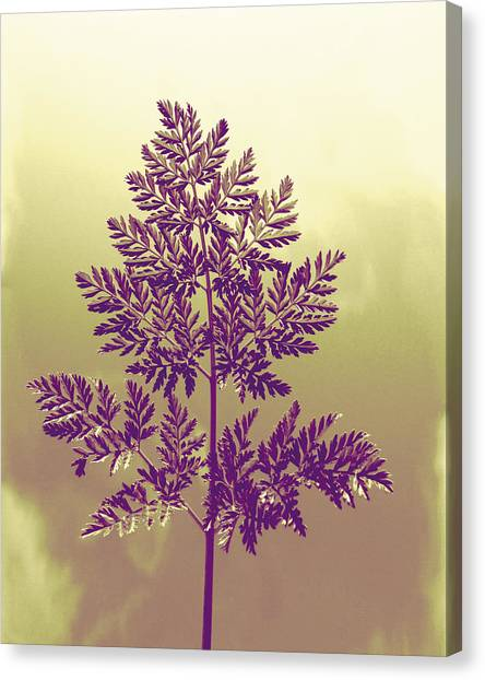 Fern Canvas Print by Andrea Dale