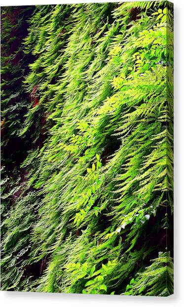 Fern Canyon Canvas Print