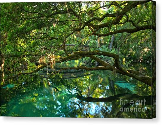 Fern Hammock Canvas Print