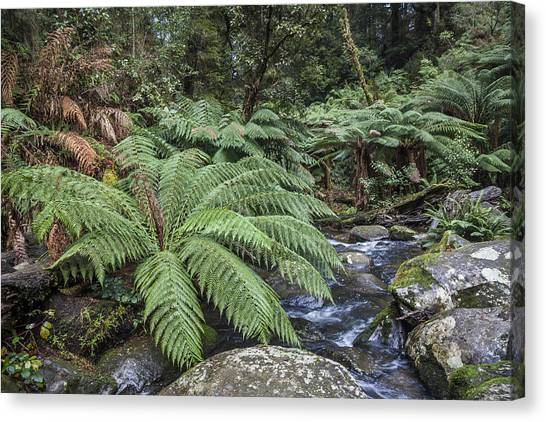 Great Otway National Park Canvas Print - Ferntree Gully by Shari Mattox