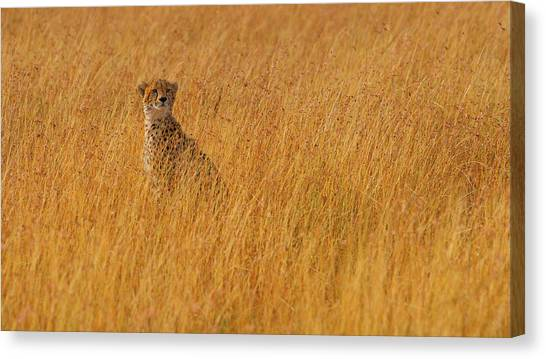Camouflage Canvas Print - Ferrari Of The Bush by Mohammed Alnaser
