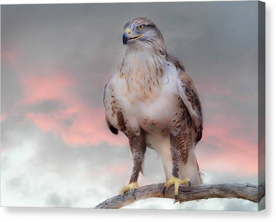 Ferruginous Hawk At Dusk Canvas Print