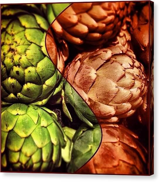 Artichoke Canvas Print - Festive Artichokes. #food #veggie by Colleen Paige
