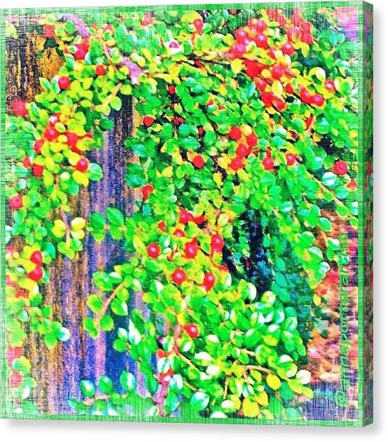 Berries Canvas Print - Festive Berries #floral #landscape by Anna Porter