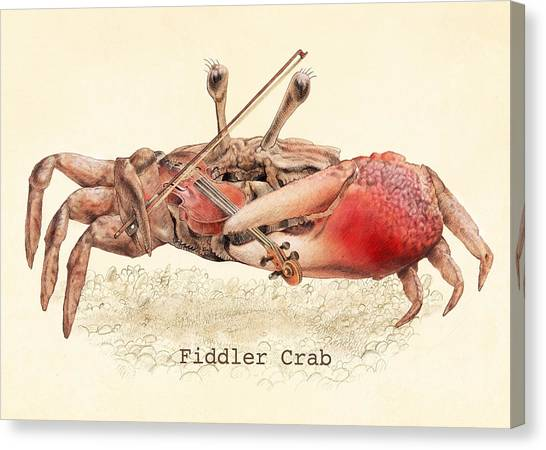 Crab Canvas Print - Fiddler Crab by Eric Fan