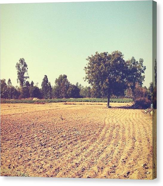 Grove Canvas Print - Field Day #farm #field #trip #country by Vignesh N