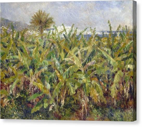 Banana Tree Canvas Print - Field Of Banana Trees by Pierre-Auguste Renoir