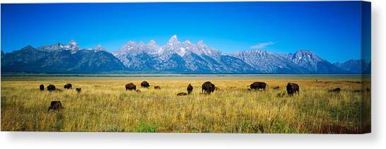 Open Range Canvas Print - Field Of Bison With Mountains by Panoramic Images