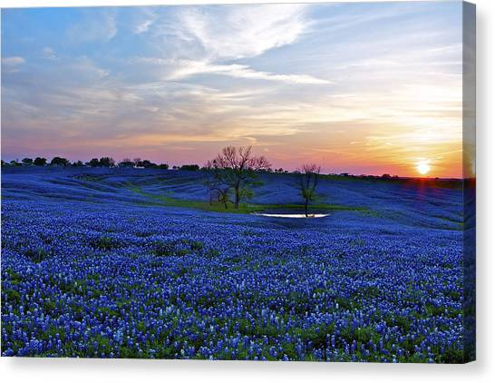 Field Of Blue Canvas Print