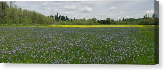 Field Of Camas And Western Buttercup Canvas Print by John Higby