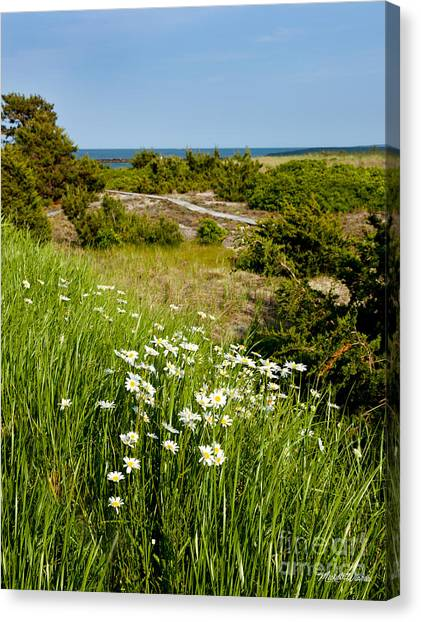 Landscapes Canvas Print - Field Of Daisies By The Sea by Michelle Wiarda-Constantine