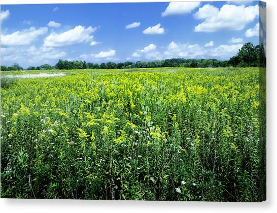 Field Of Flowers Sky Of Clouds Canvas Print