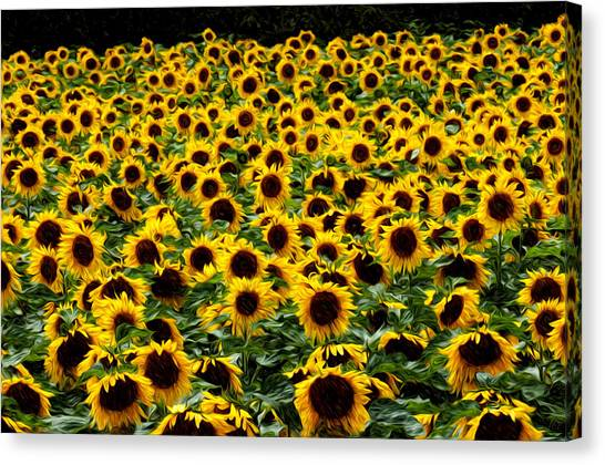 Field Of Flowers Canvas Print by Mitchell Brown