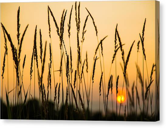 Field Of Gold Canvas Print