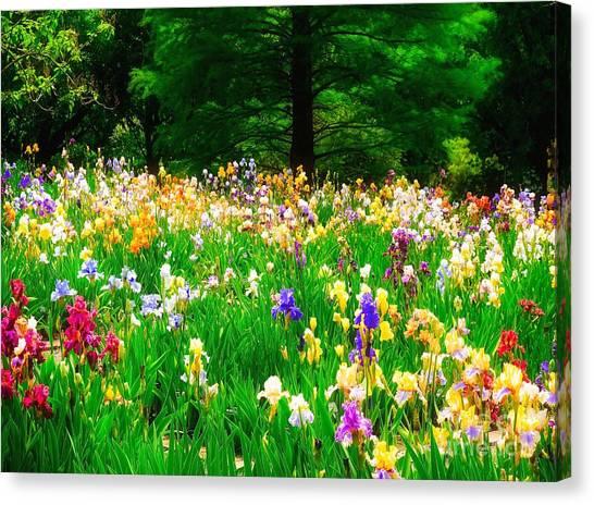 Field Of Iris Canvas Print