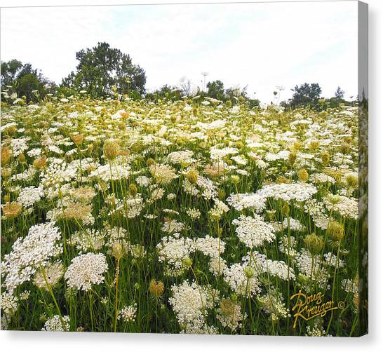 Field Of Lace Canvas Print