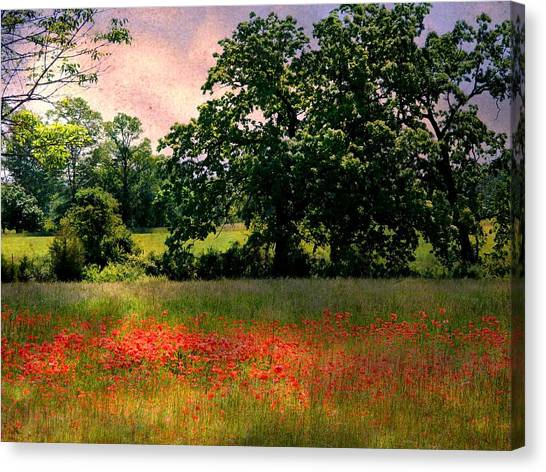 Field Of Poppies Canvas Print by Anne McDonald