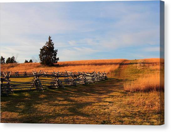 Field Of Shadows Canvas Print