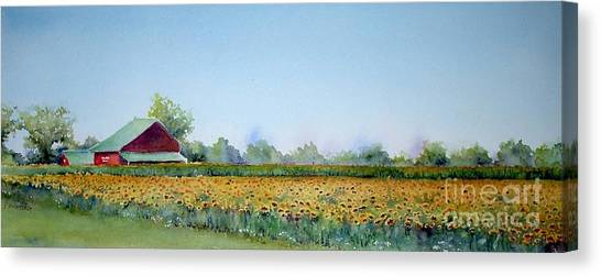 Field Of Sunshine Canvas Print
