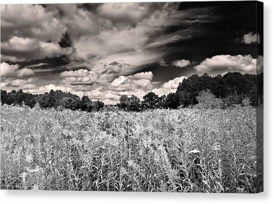 Fields Of Gold And Clouds Canvas Print