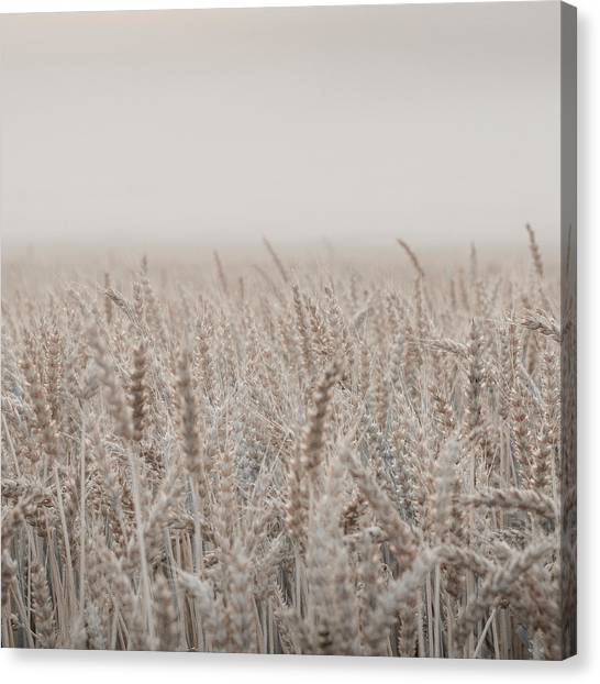 Pastel Canvas Print - Fields Of Love by Aldona Pivoriene