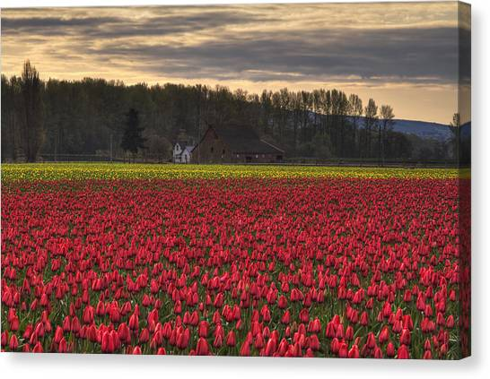 Kung Fu Canvas Print - Fields Of Tulips by Mark Kiver