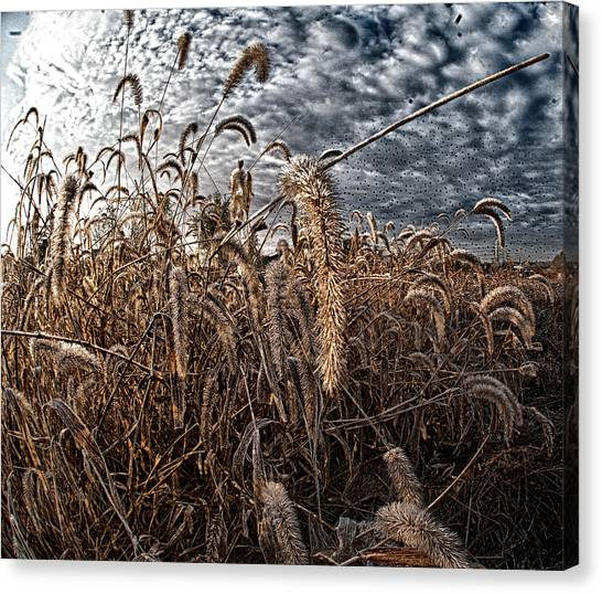 Fierce Grasses Canvas Print