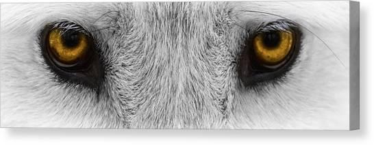 Arctic Wolf Canvas Print - Fiery Eyes by Eduard Moldoveanu