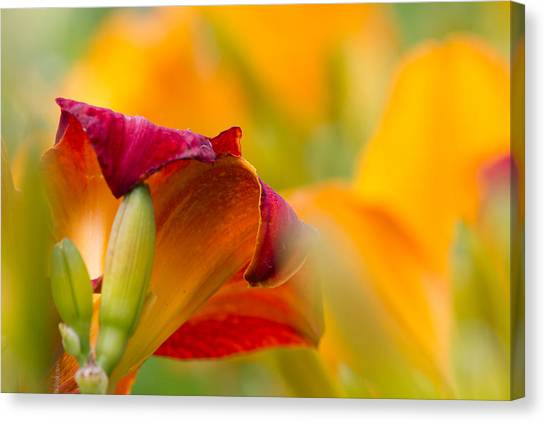 Grandpa Canvas Print - Fiery Flora by Mary Amerman
