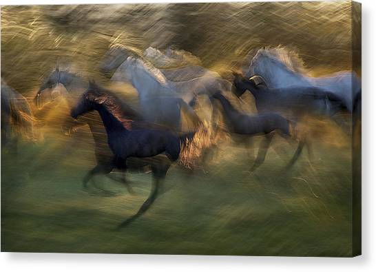 Abstract Horse Canvas Print - Fiery Gallop by Milan Malovrh