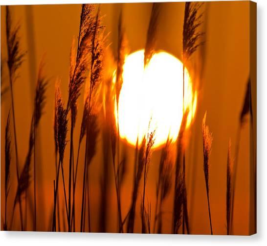 Fiery Grasses Canvas Print