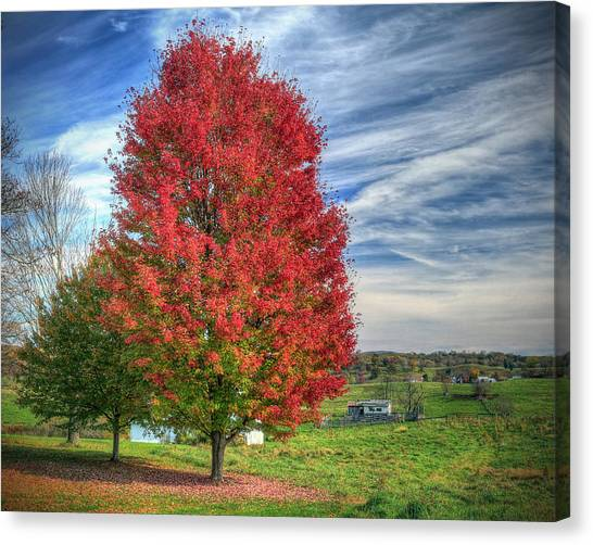 Fiery Red Maple Canvas Print