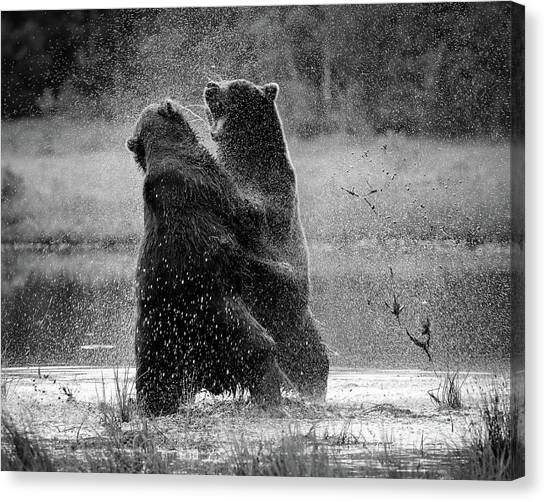 Brown Bears Canvas Print - Fight by Siv Wester